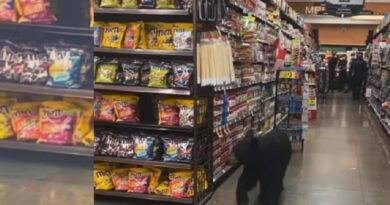 Bear in Los Angeles grocery store